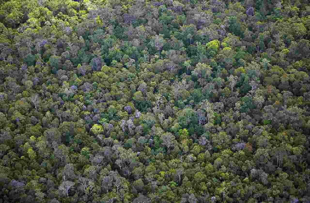 La Foresta del Borneo