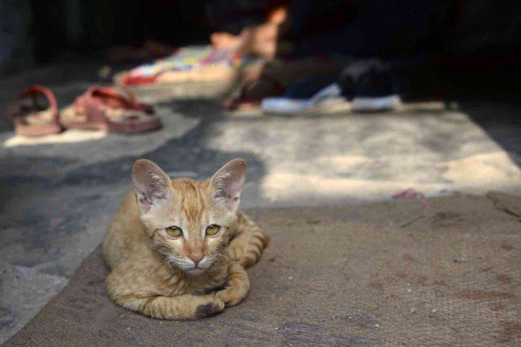 Covid-19 primo caso gatto positivo contagiato padrone