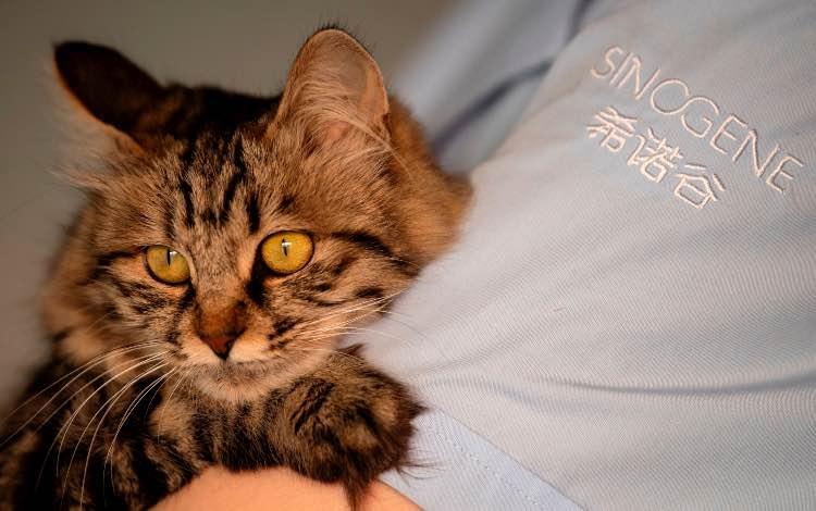 Coronavirus gatto