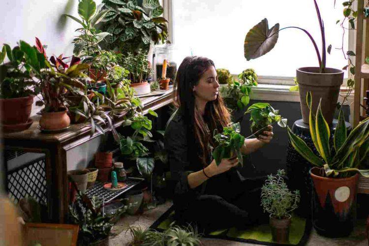 innaffiare piante in vaso