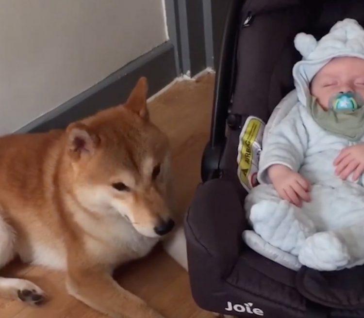 cane neonato
