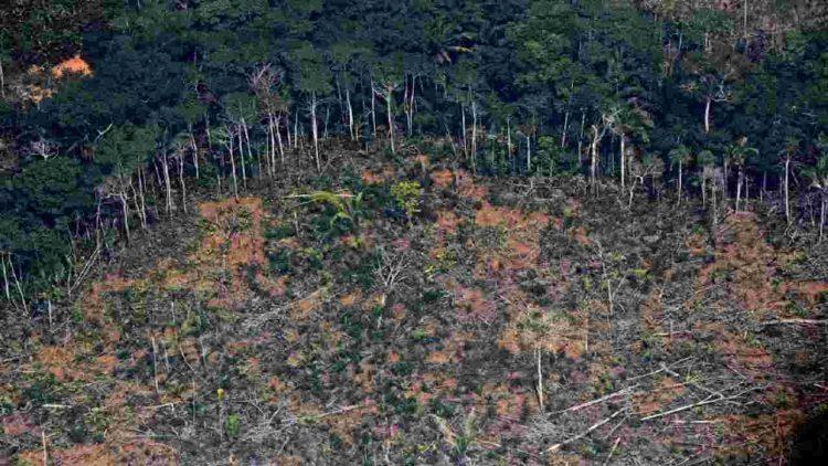 Disboscamento alberi foresta