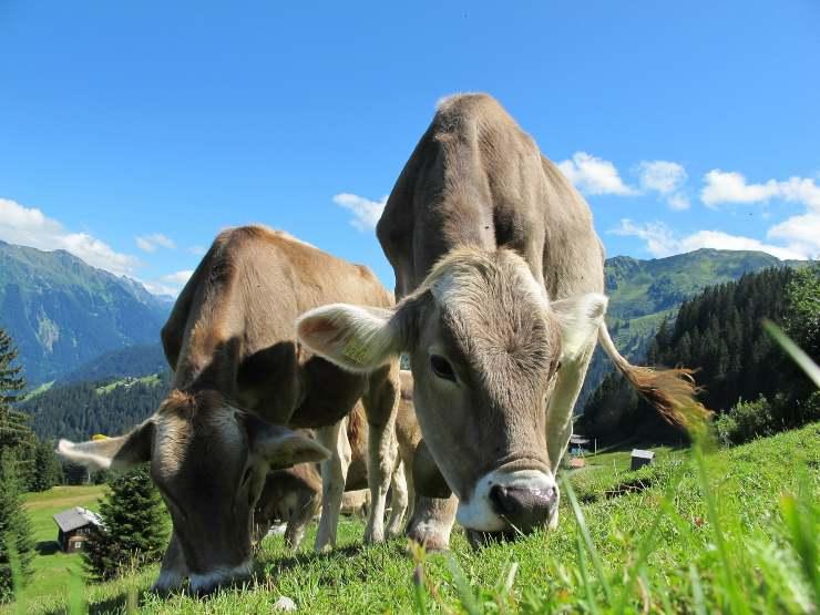 Austria: boom di contagi, chiudono di nuovo scuole e asili