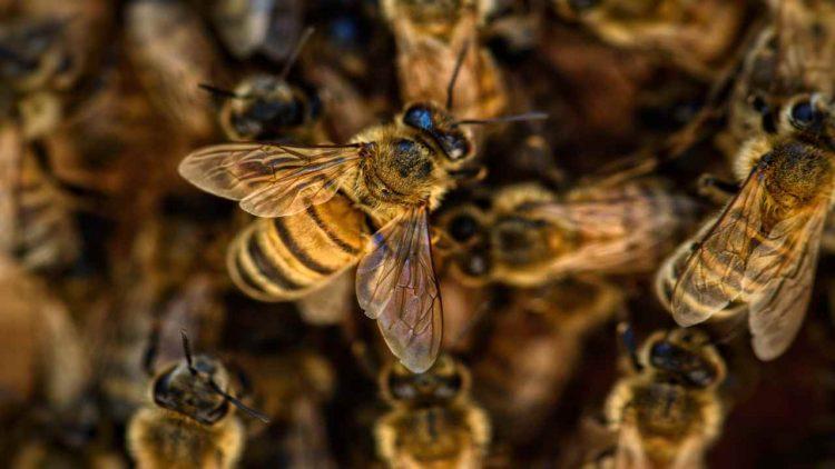 Cosa fare quando un'ape ti punge
