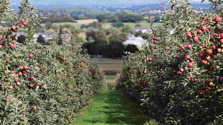 Meleti Alto Adige (Pixabay)