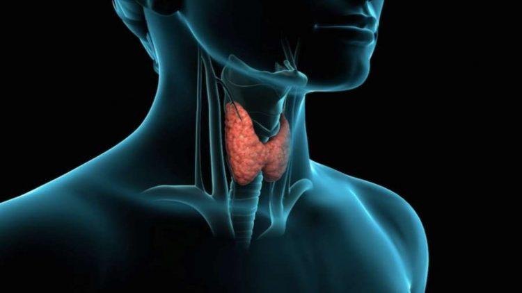 Bonus tiroide (foto dal web)