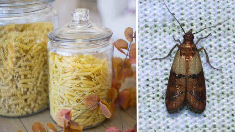 Farfalline del cibo (foto dal web)