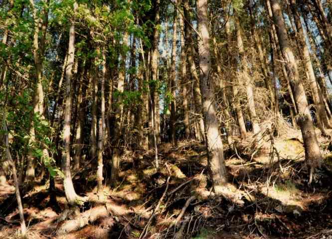 Teschio ritrovato nei boschi: è della piccola Iuschra