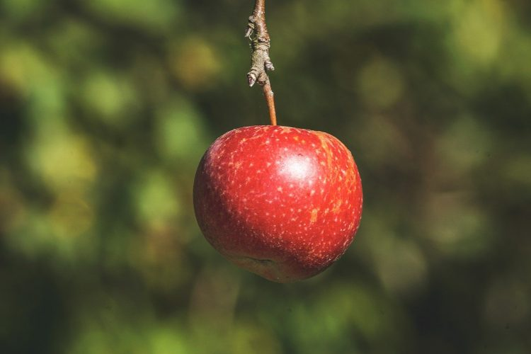 Frutti ottobrini benessere