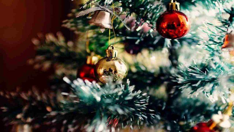 Regole Natale Zampa