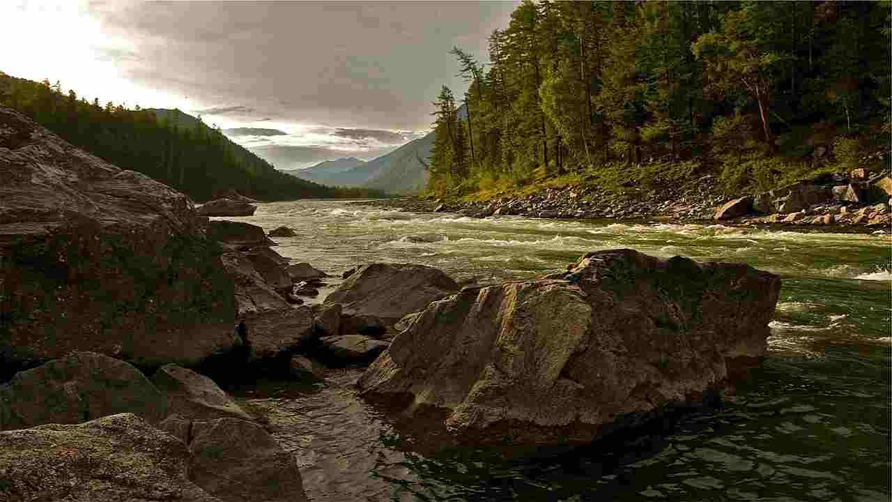 Asprete pesce fiume