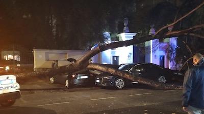 Maltempo albero caduto a Roma