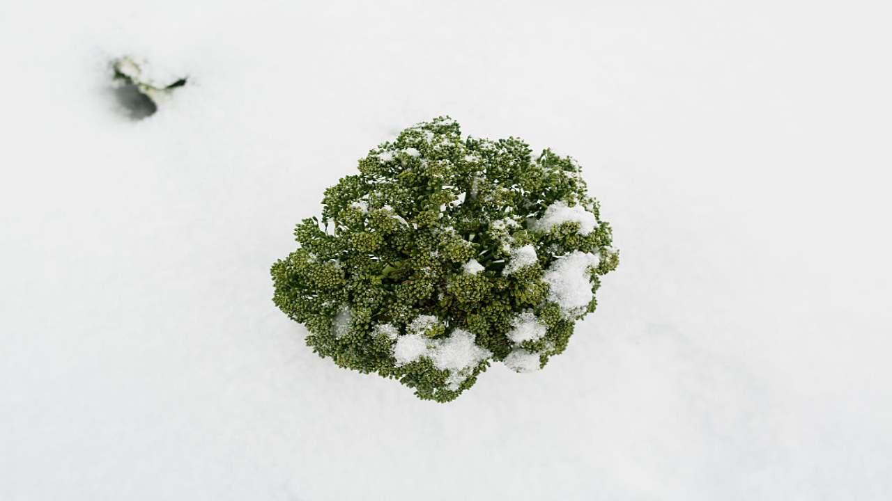 Proprietà antitumorali Broccoli