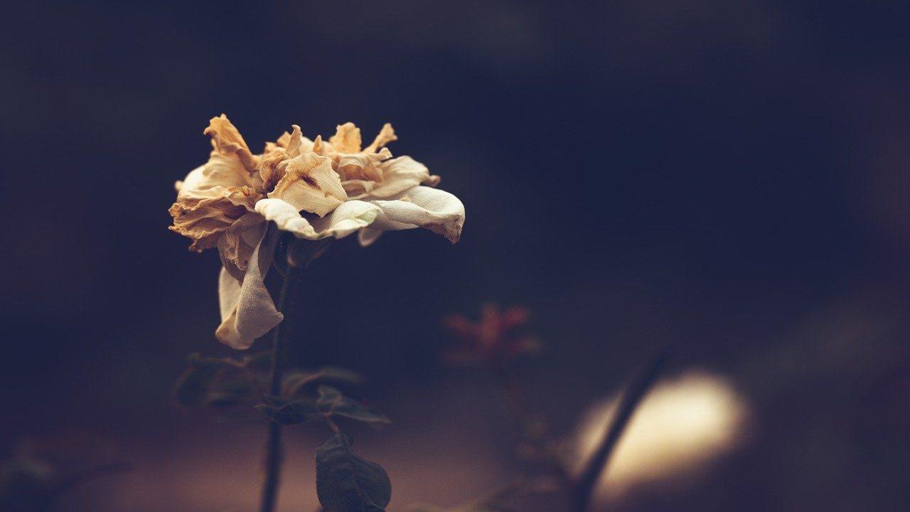 fiori appassiti