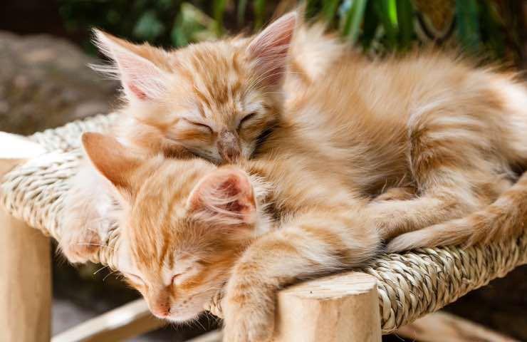 Gatti casa odori pericolo