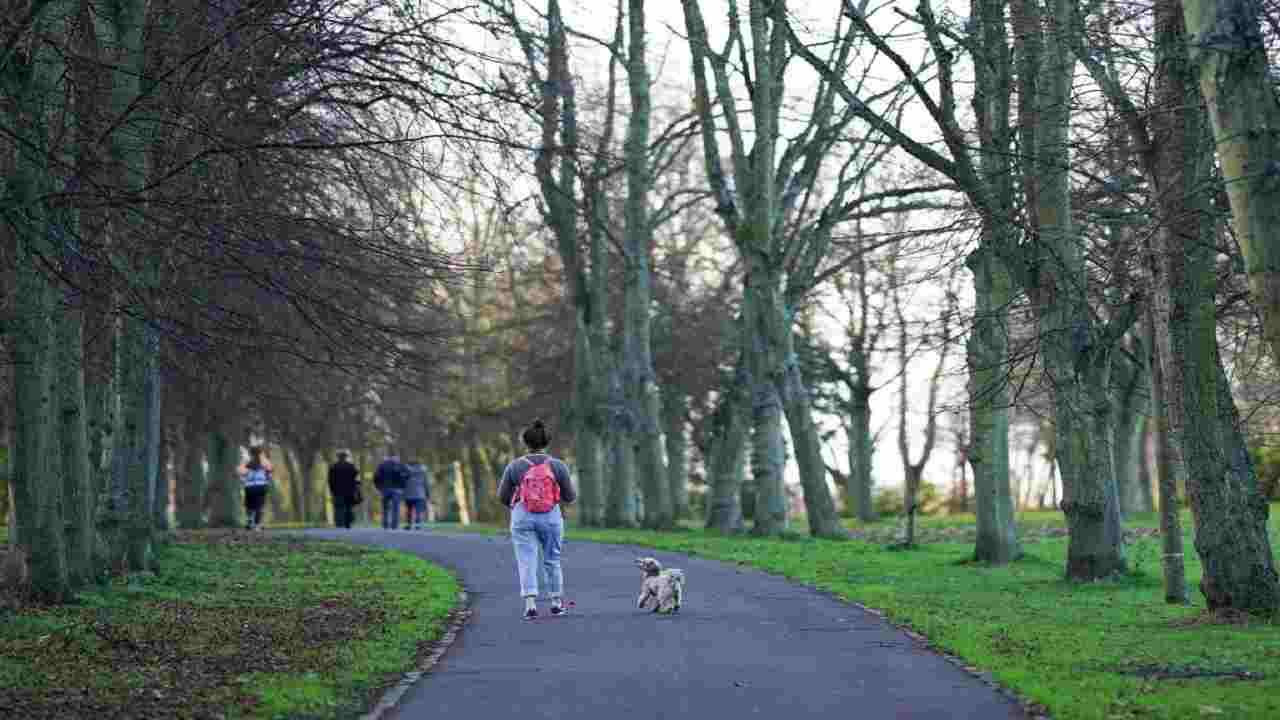 Galles Cani donna muore strangolata