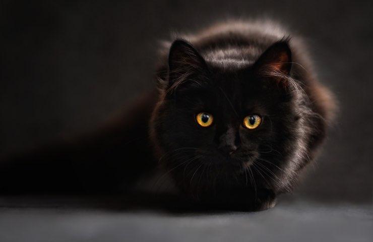 gatto odori pericolosi casa