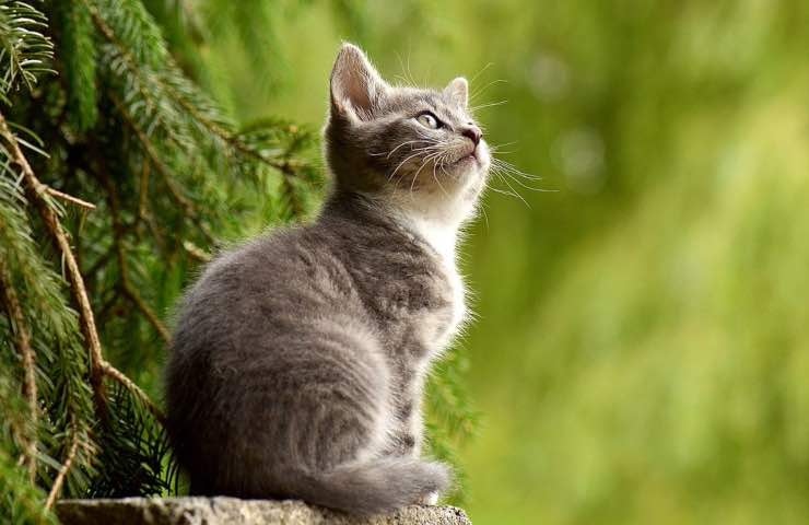 gatto casa odori pericolo