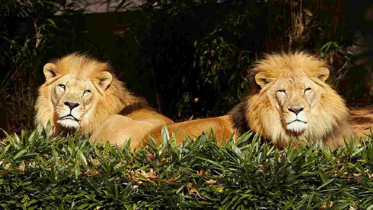 India leoni ragazza
