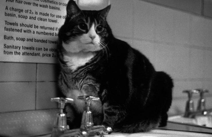 gatto prima volta lavare