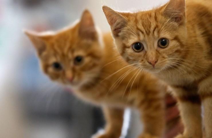 adozione animali
