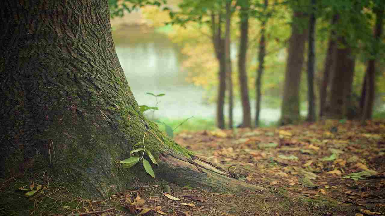 India ragazza morta appesa ad un albero