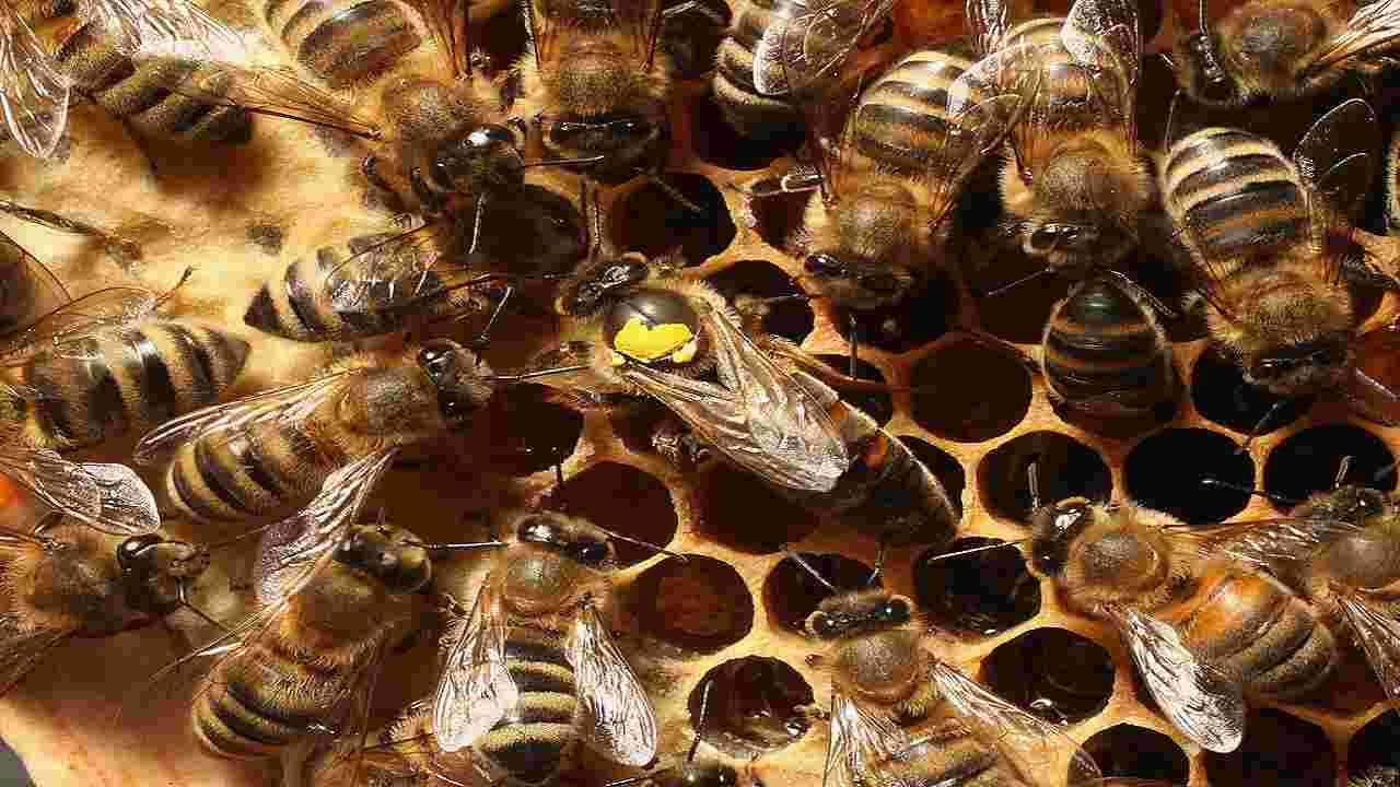 Brexit api decisione sostanza pericolosa