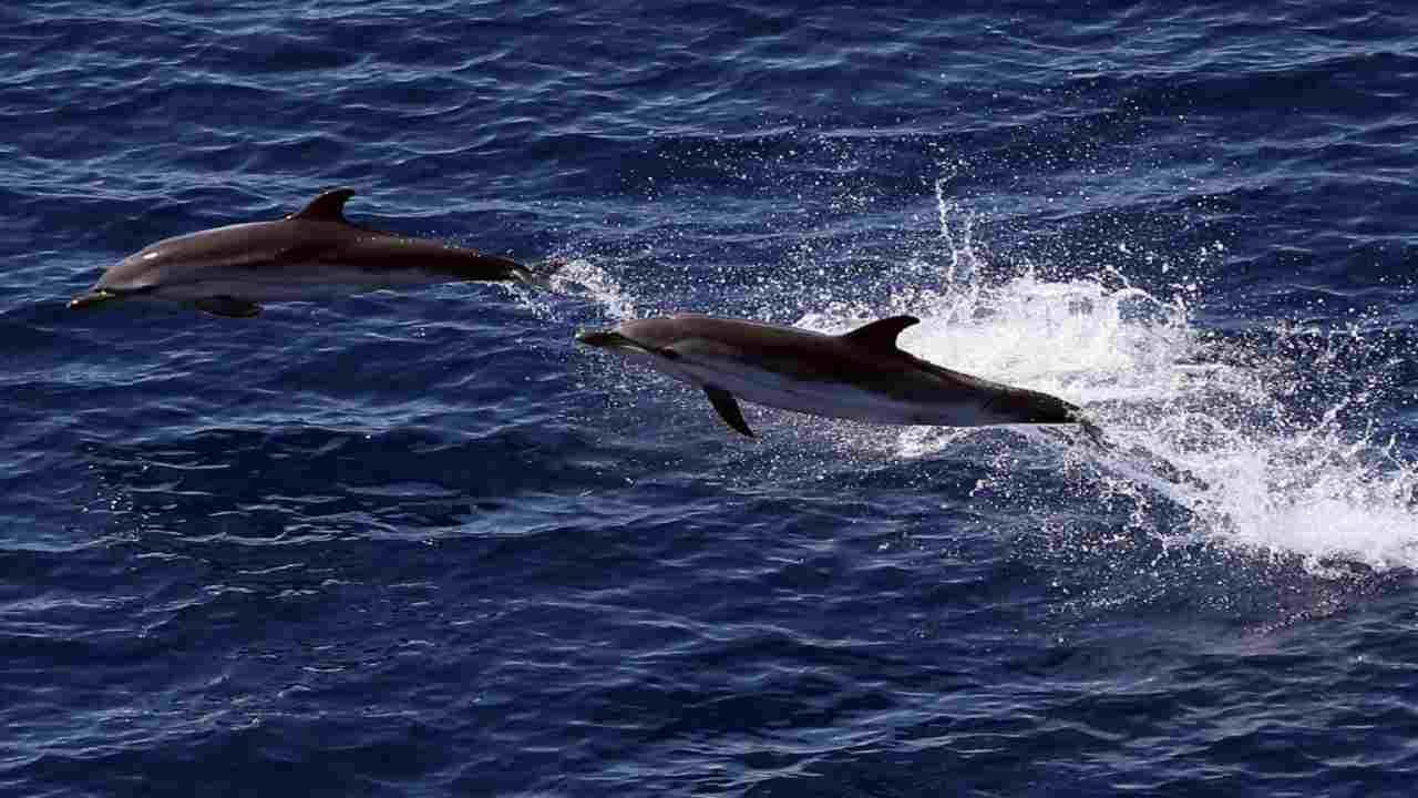 Delfini malattia letale pelle