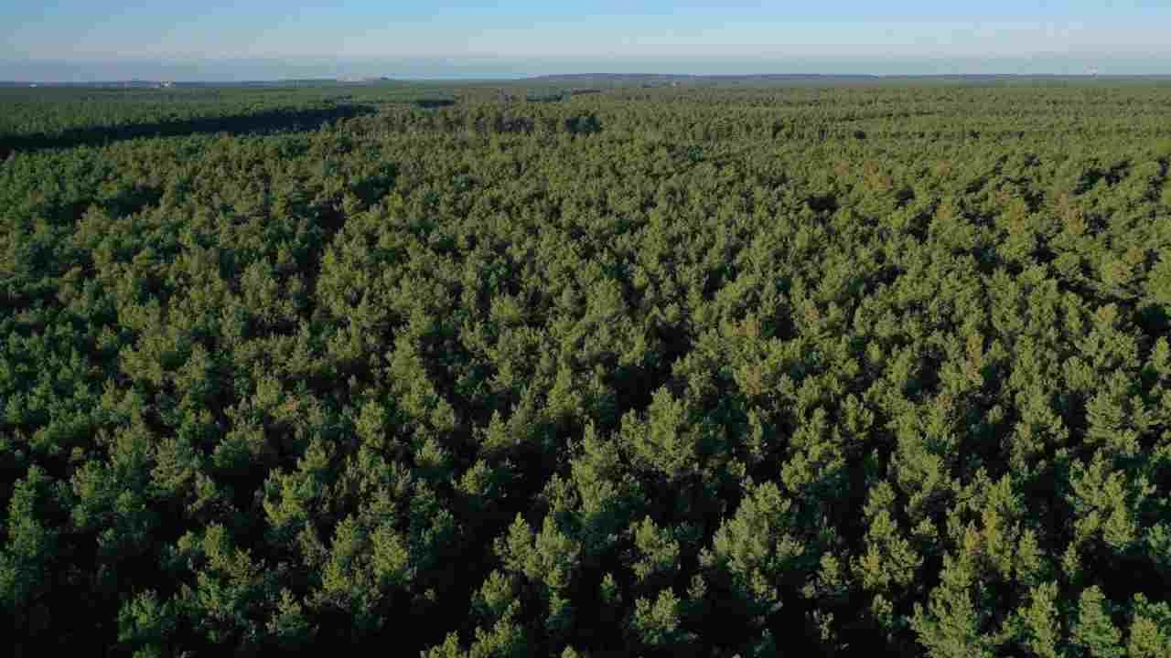 Riscaldamento globale ruolo foreste