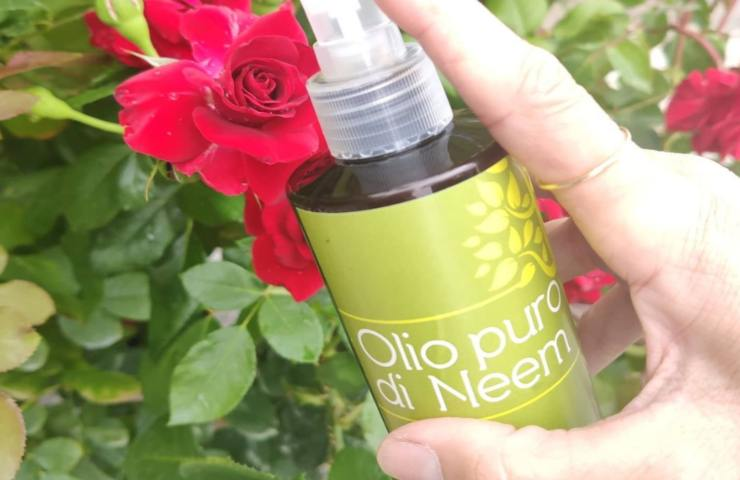 Olio di Neem, proprietà e benefici di un potente alleato per la nostra bellezza