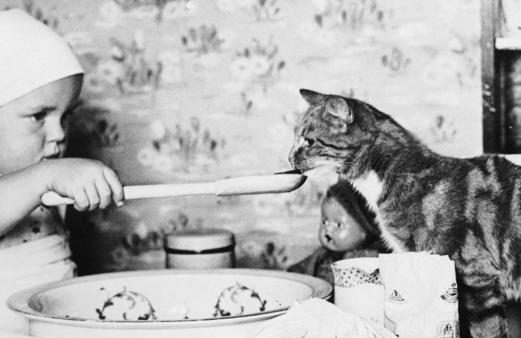 Alimentazione gatto allungare vita
