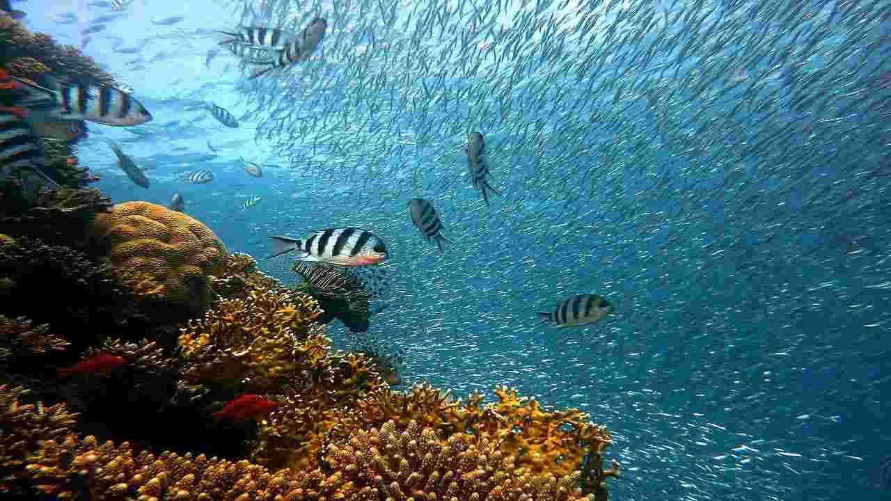 Barriera Corallina Mar Rosso oleodotto