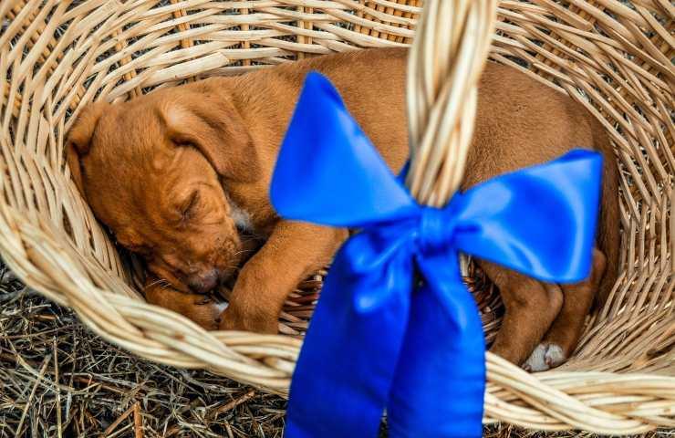 San Valentino mai regalare animale