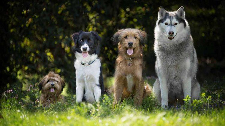 le 5 cose che i cani fanno meglio degli esseri umani