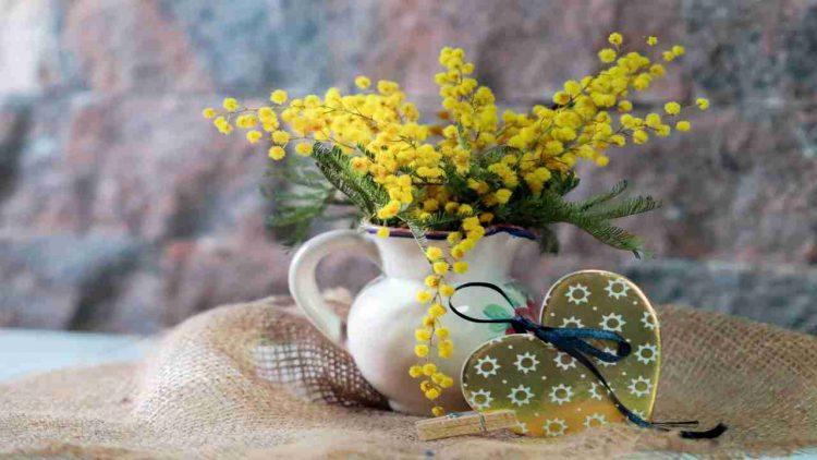realizzare mimosa fai da te