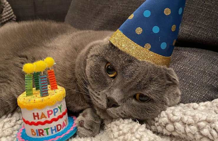 Calcolare età gatto
