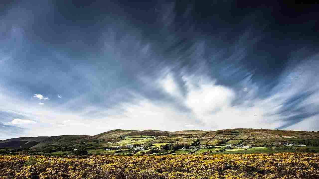 Irlanda perdita biodiversità studio