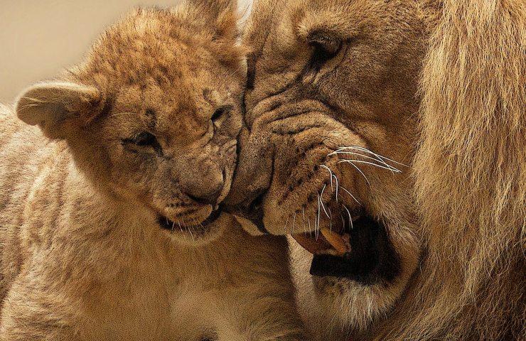 peggiori genitori animali