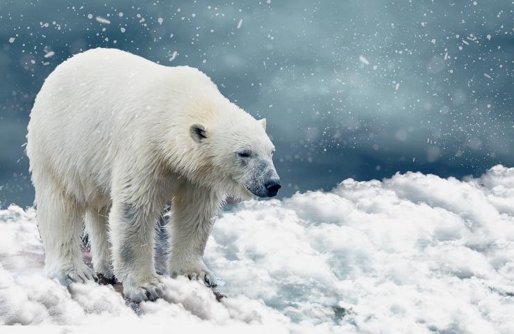 Orso Polare pixabay