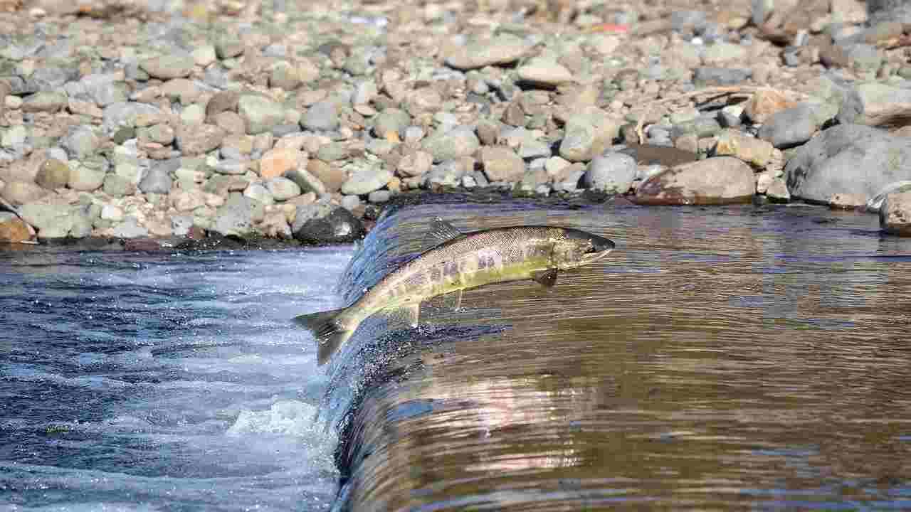 Pesci acqua dolce rischio estinzione
