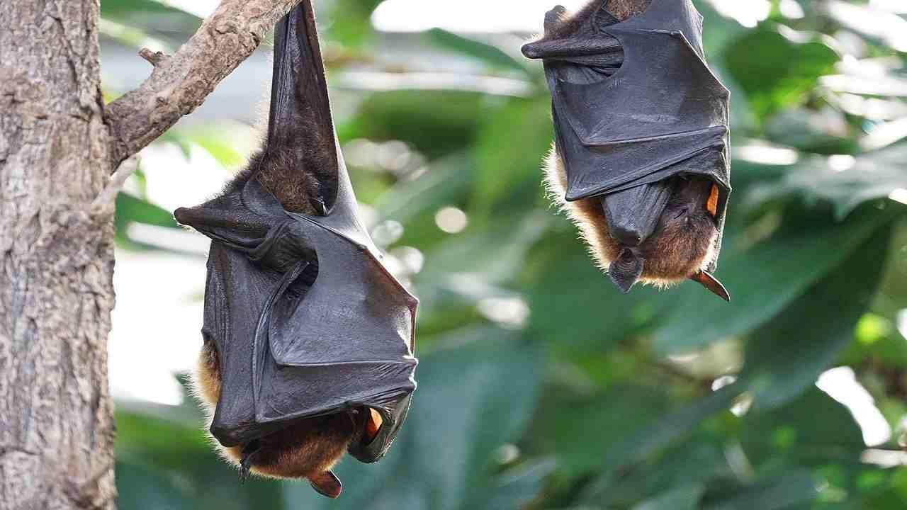 Pandemia covid-19 riscaldamento globale pipistrelli