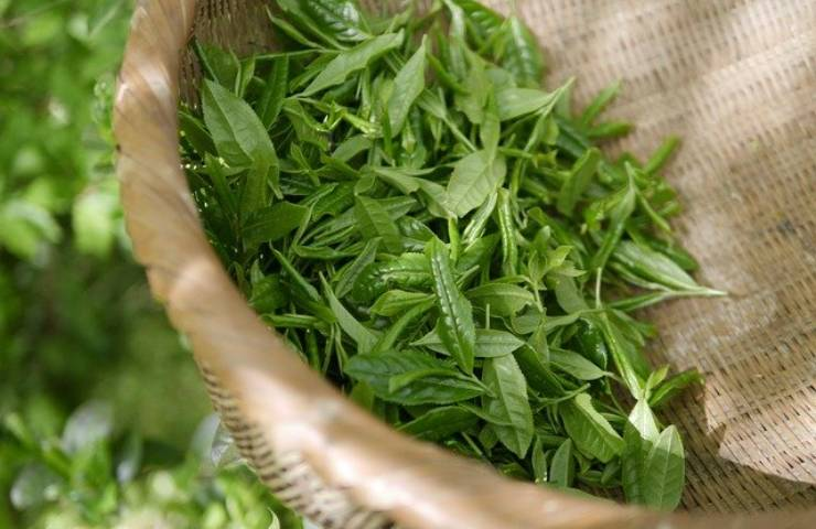 Tonico al tè verde