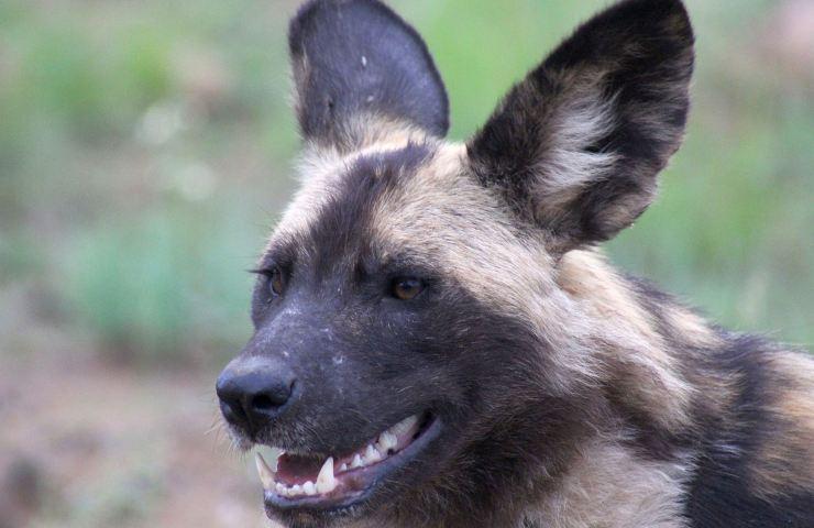 5 cose che i cani fanno meglio degli esseri umani