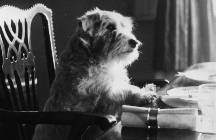 cani quanto devono mangiare