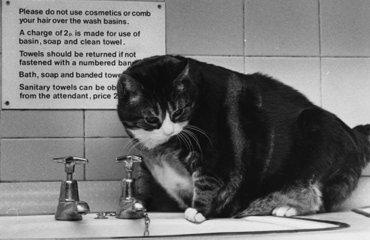 Gatti imparare usare wc