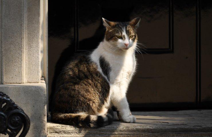 gatti randagi tenerli debita distanza
