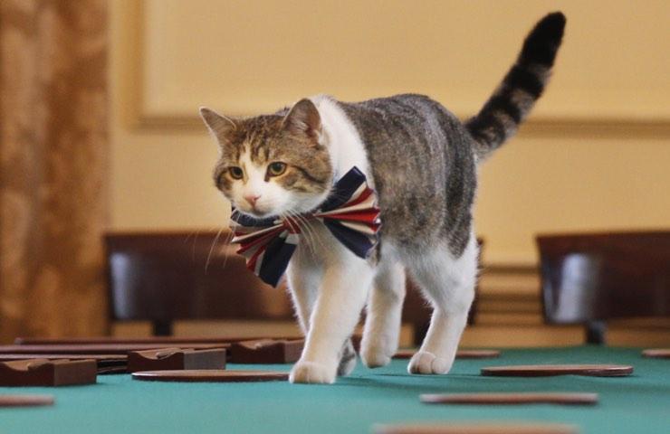 gatti addestramento possibile metodi