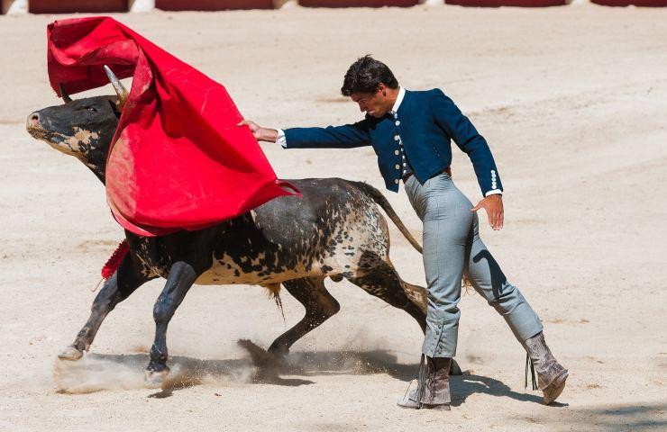 6 miti leggende metropolitane sugli animali