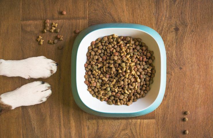 Croccantini per cani come farglieli mangiare