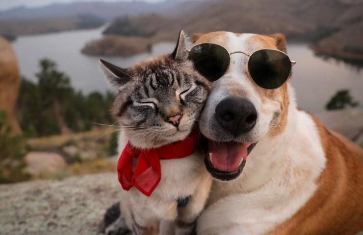 Gatto e cane rivalità motivi